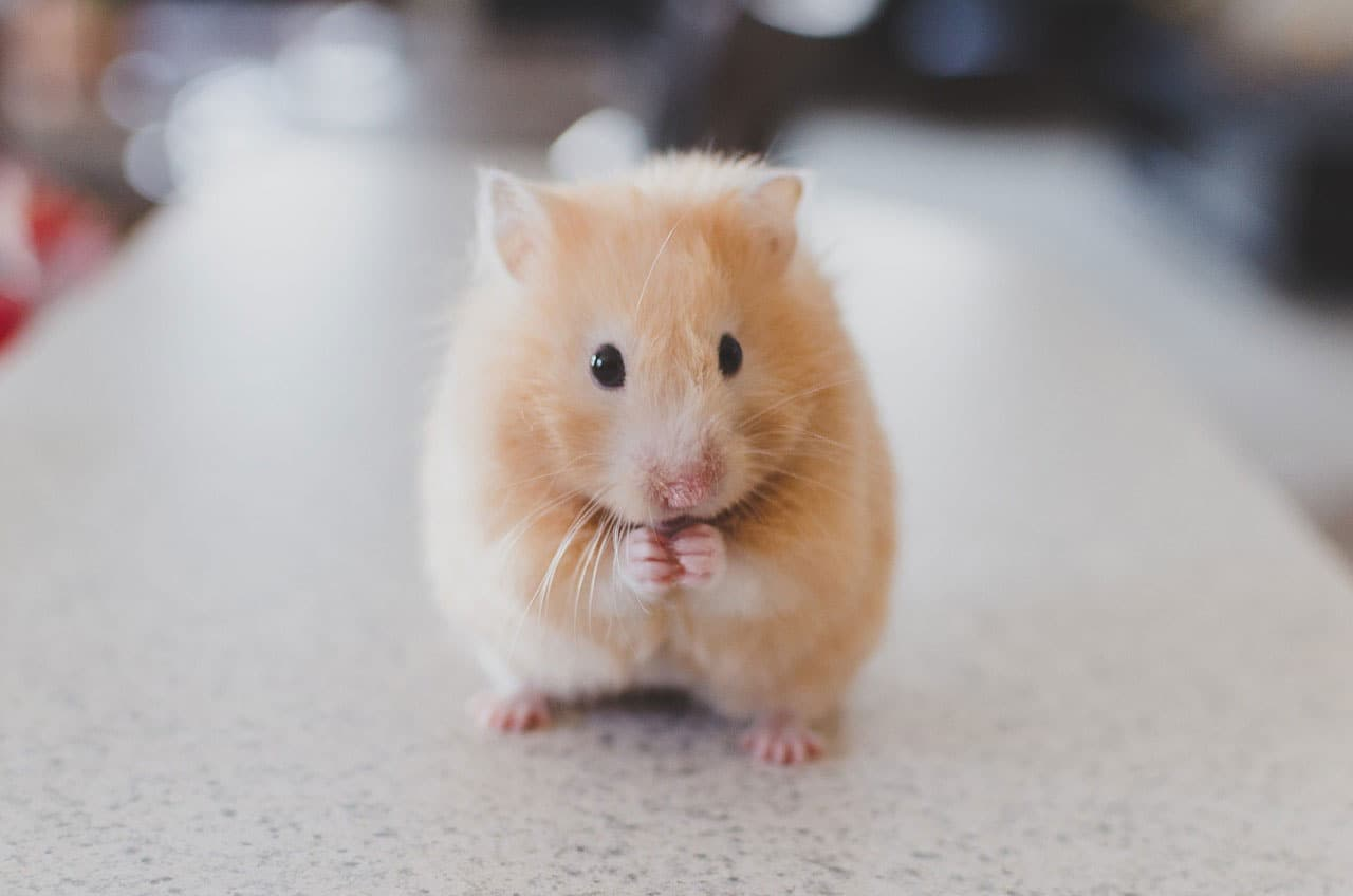 "Neue Unit bei Intensive Senses: Mit ""Flausch"" zu ""Likes"" - Hamster driven Content Marketing"